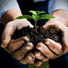 Hnojiva, postřiky